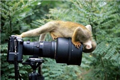 Monkey & camera