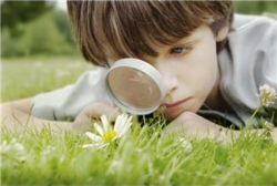 Child w Microscope investigateing daisy